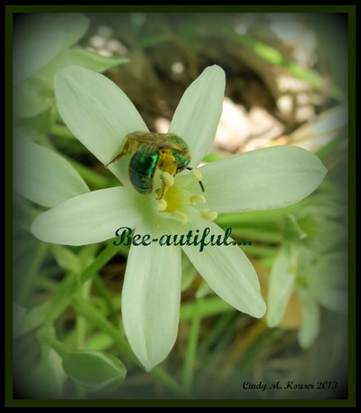 Have a Bee-autiful Day!!