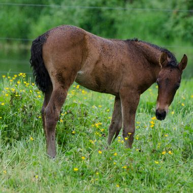 Filly 3