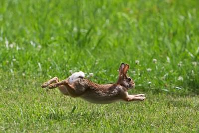 Mid Air Rabbit