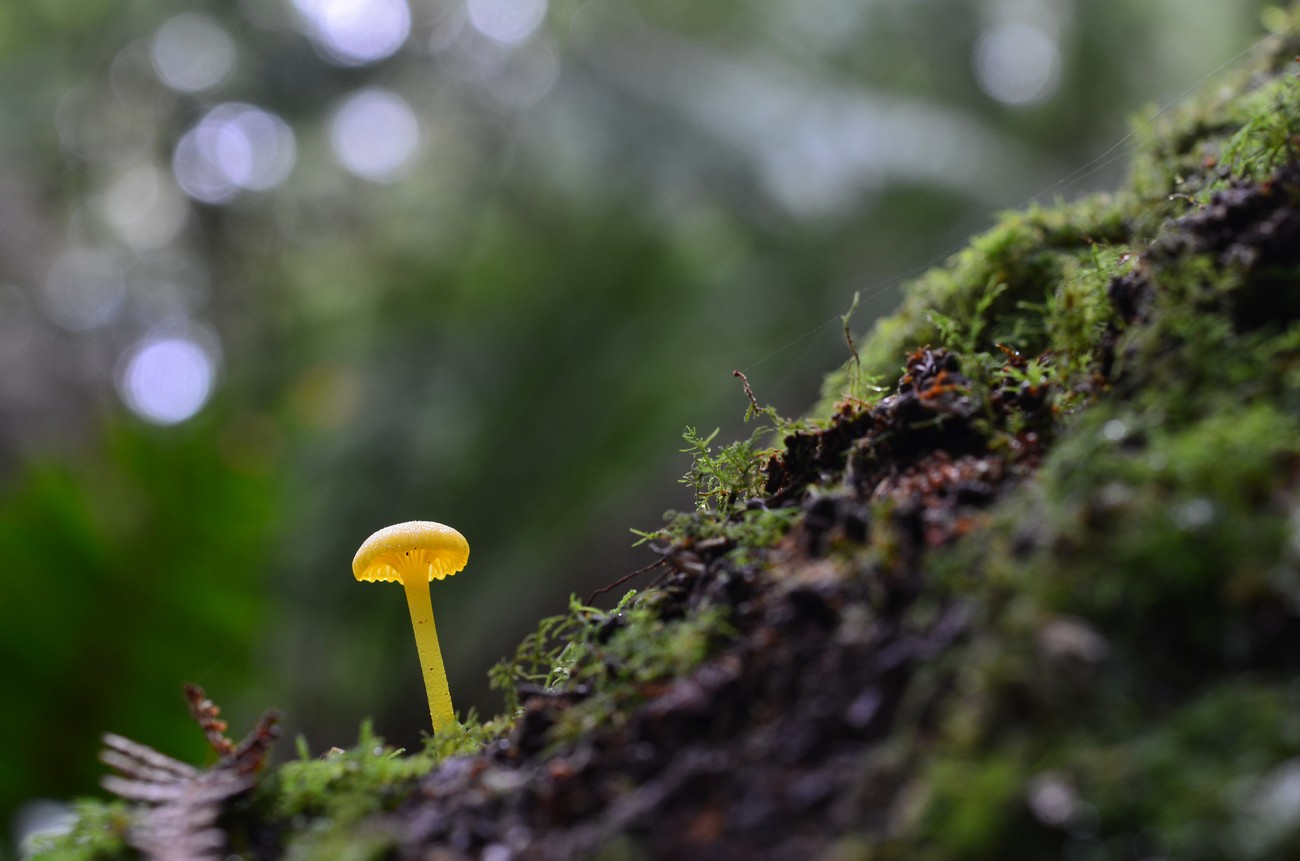 Behind The Lens With glendamaree - photo little yellow mushroom