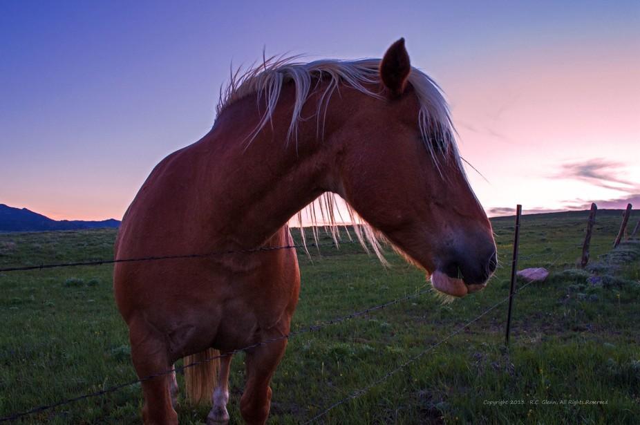 Boxelder Canyon Horses