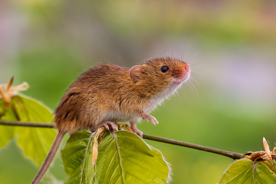 This little chap was photographed on a British Wildlife weekend in Devon