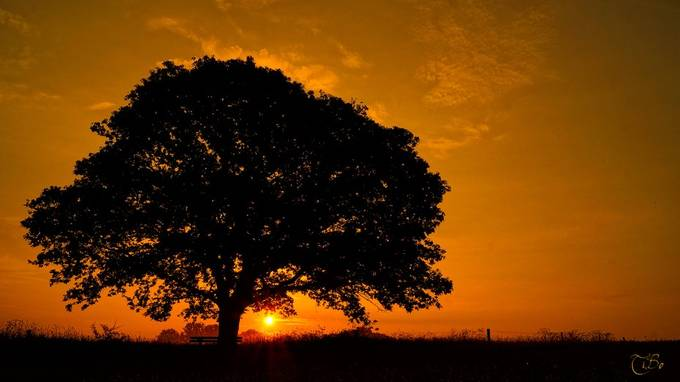 SuNriSe by Celtic - Silhouettes Of Trees Photo Contest