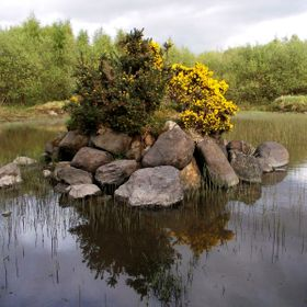 Whin bush rockery in an old quarry pond