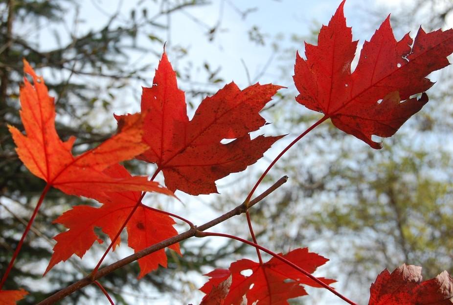 Fall colours in Oshawa,Ontario,Canada