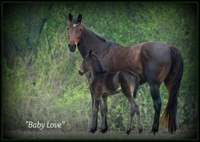Baby Love, Mama and Baby...