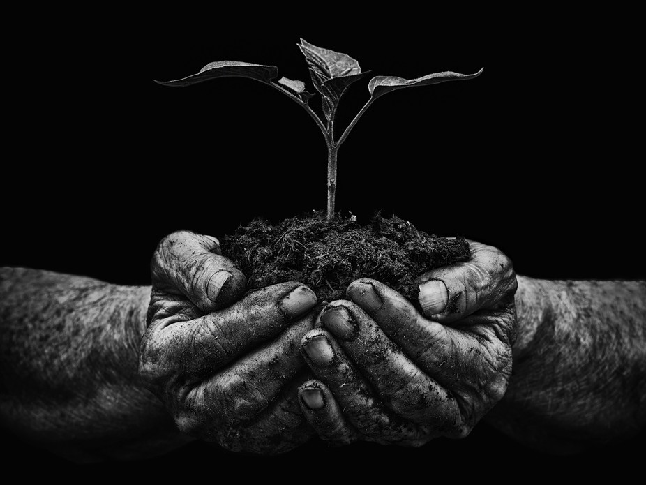 my dads hands photographed with a young seedling