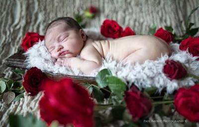 A Rose Amongst Roses