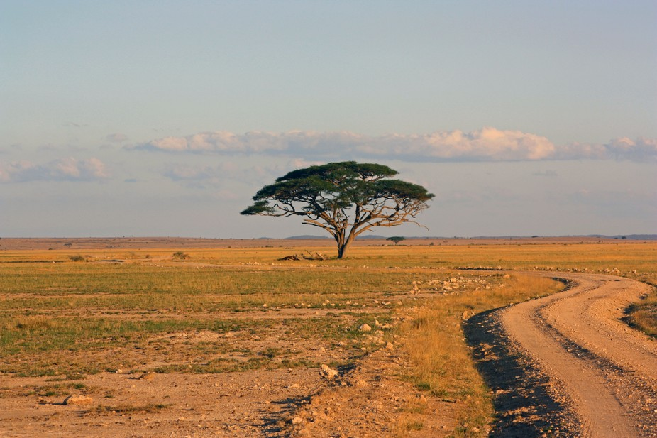 Shot on the Masai Mara, Kenya