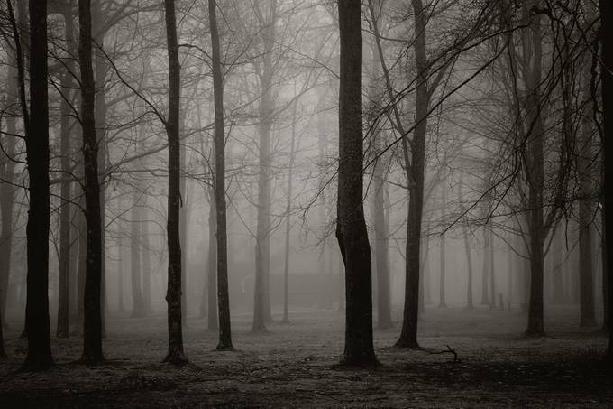 Hazy woods by melissawegner - Lost In The Fog Photo Contest