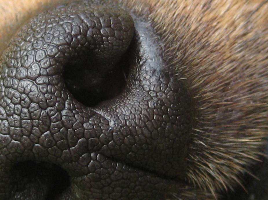 The nose of Pumpkin.