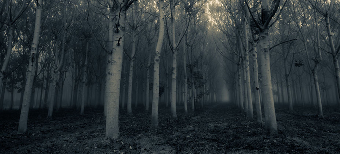 Endless Forest by silviali - Dark Forest Photo Contest