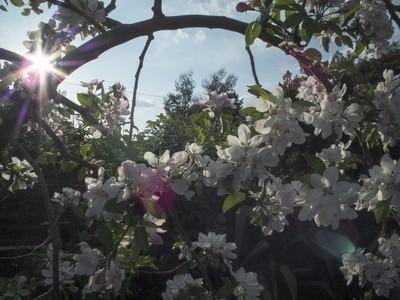 Blossom Arc