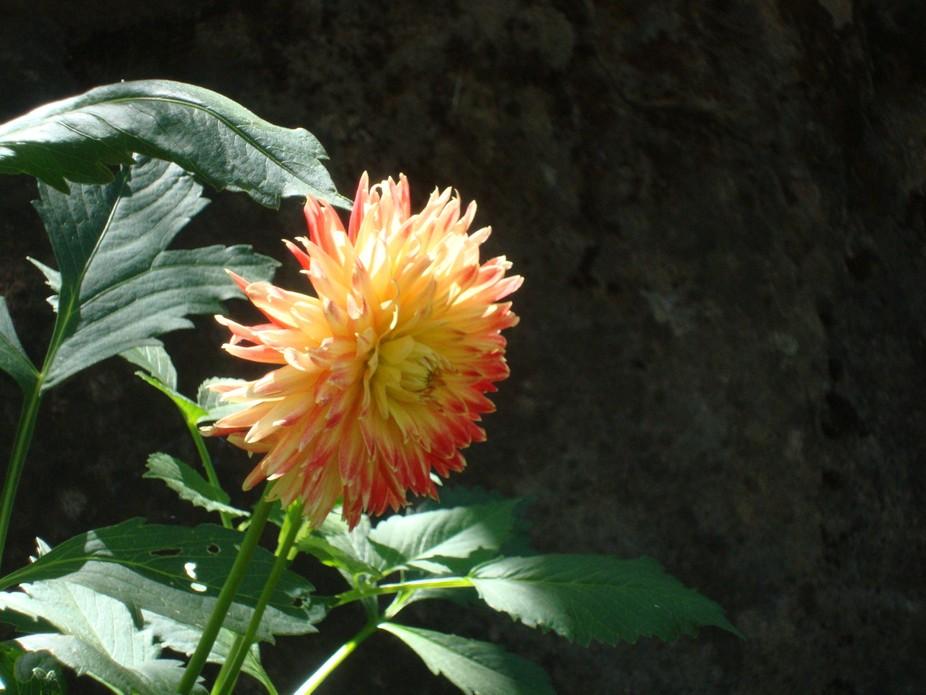 Flowers in the Backyard