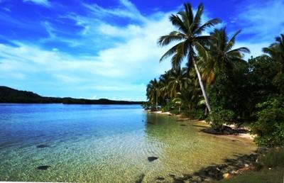 palm in bay
