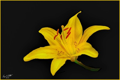 Lilly4