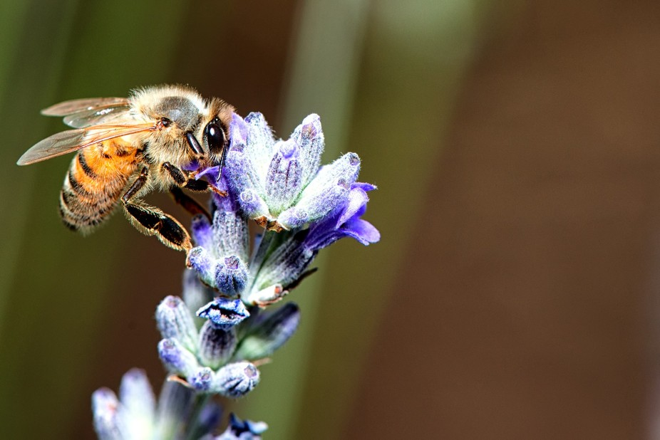 Makin some bee honey :)