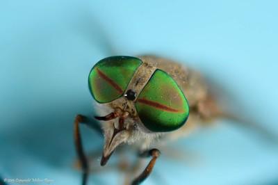 Macros Fly