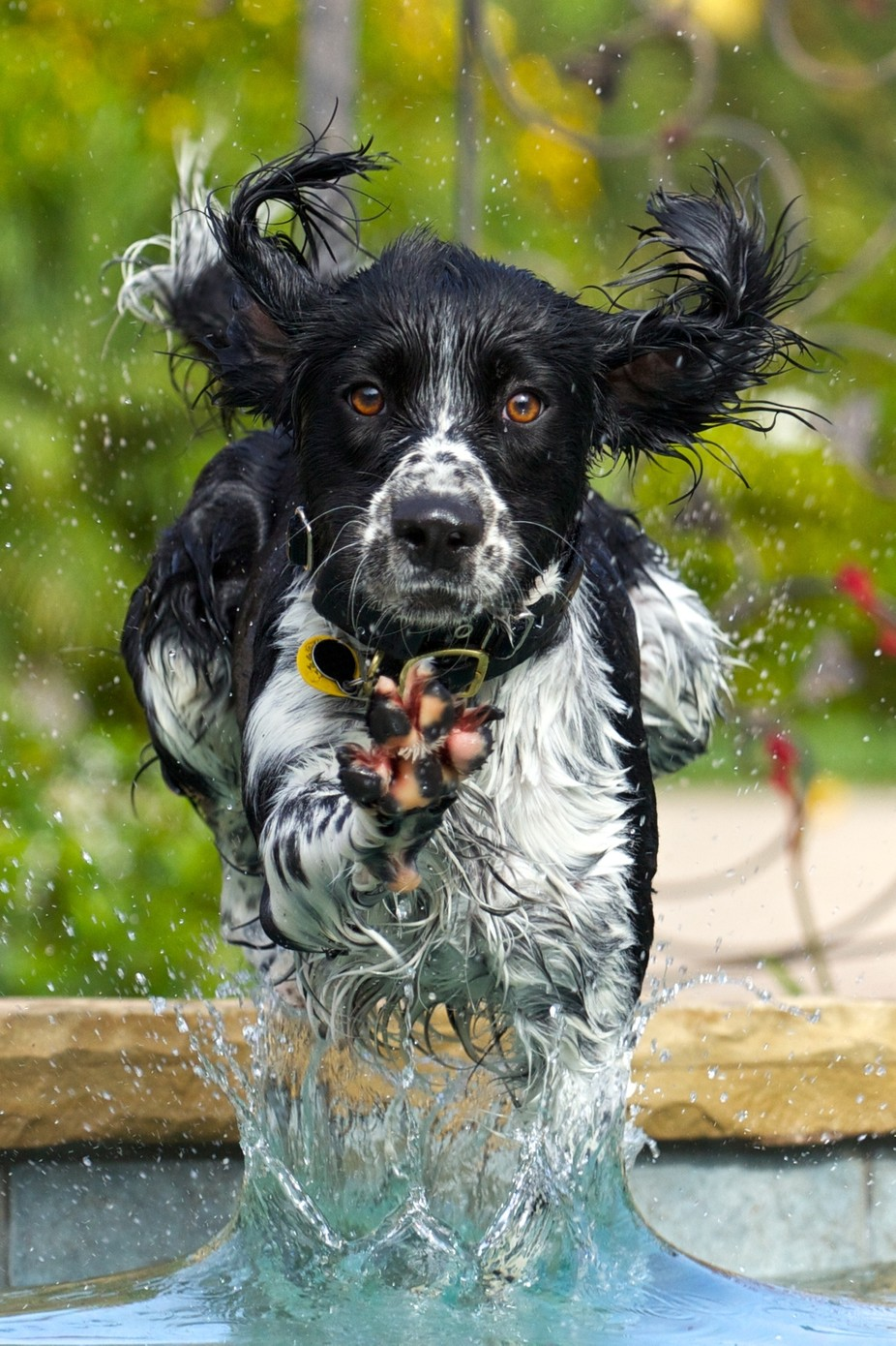 Water Dog by jvcron - Pets With Character Photo Contest