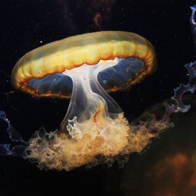 One of my goals as a photographer is to master photographing things behind glass, as I have demonstrated with this jellyfish photo taken at the l...