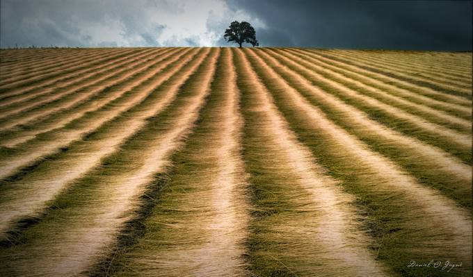The harvest & a tree by DanielGagne - Shapes and Lines Photo Contest