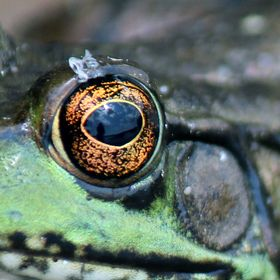 You can see my reflection in the frog's eye.
