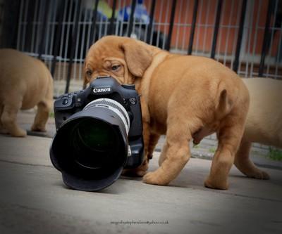 little helper..