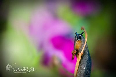 Surprised Slug!