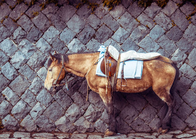 Parked horse