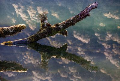 Moss Reflection
