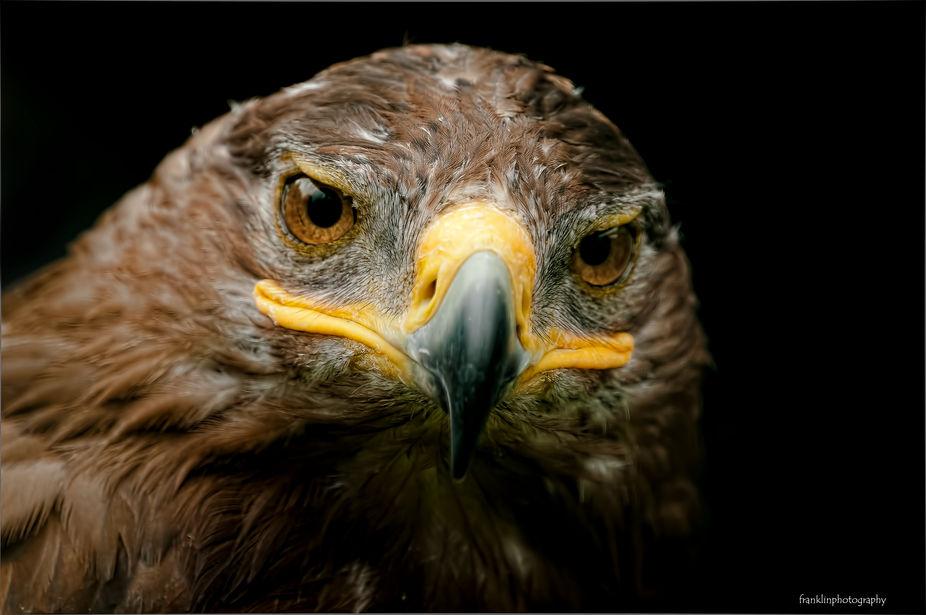 bird of prey at the huxley bird of prey center