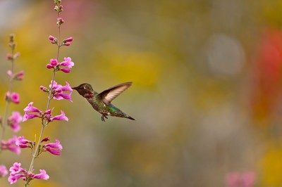 17 Stunning Photos of Hummingbirds by Awesome ViewBug Members