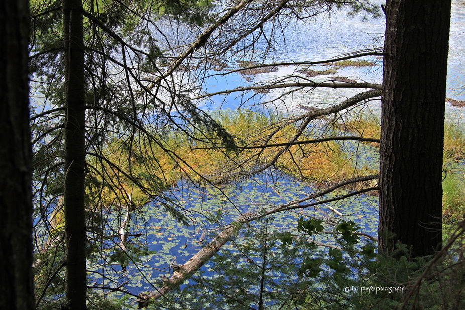 A view through the trees, on a walk through Algonquin Park.