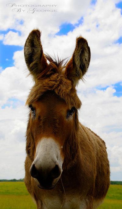 Hello donkey.