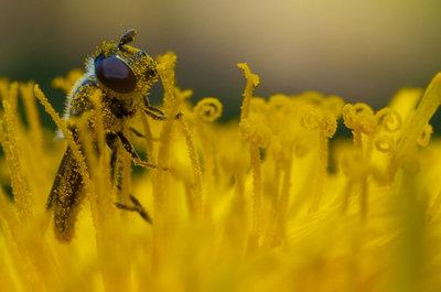 polen lover