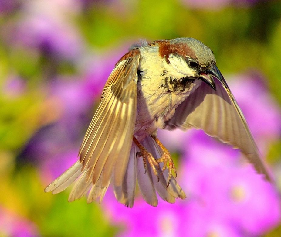 Sparrow Beating the Heat