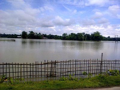 Rain water in the paddy fields. (ASSAM)