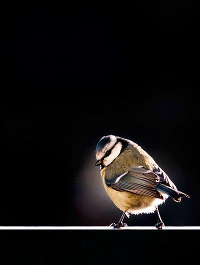 Bird on the balcony