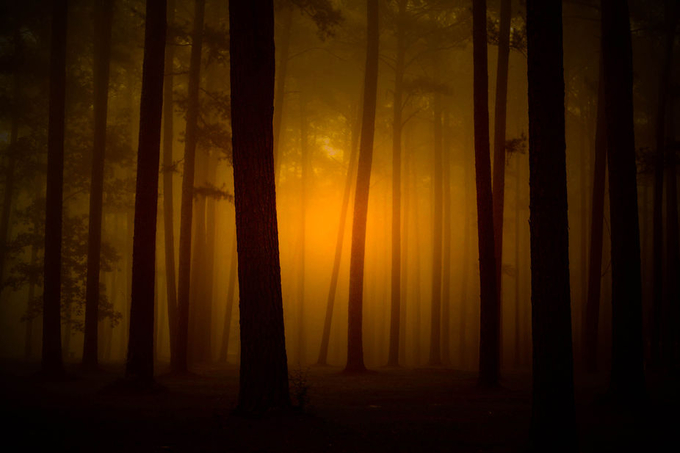 Alabama Fog by karenlindstrombusby-doss - Silhouettes Of Trees Photo Contest