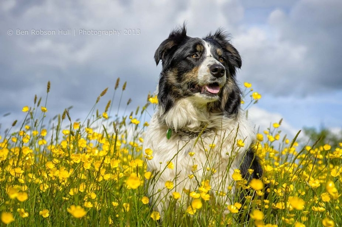 Lucy by benhull - Happy Dogs Photo Contest