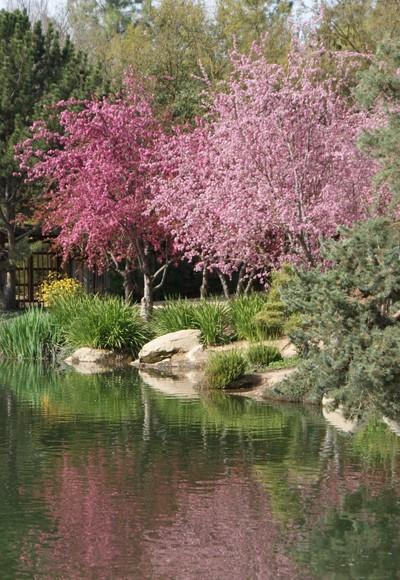 Shinzen Gardens - Woodward Park