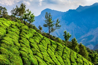 Dambatenna, Sri Lanka