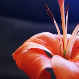 Orange flower - close-up