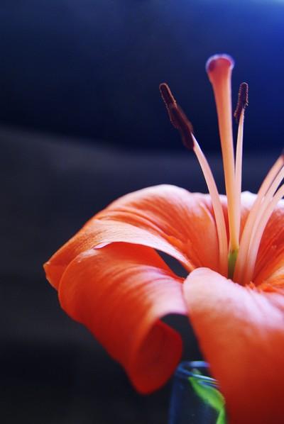 Orange flower - close-up