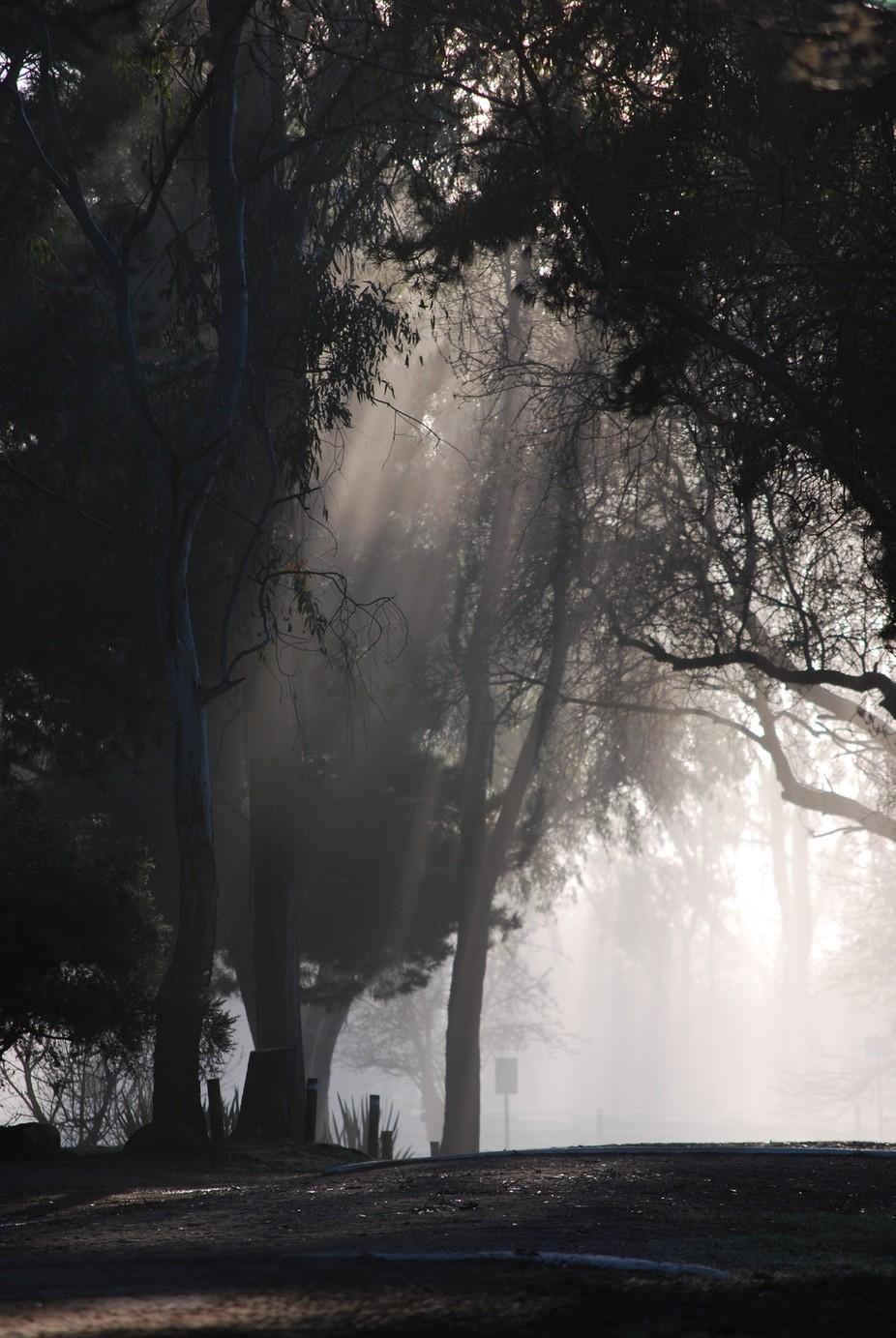 Eildon morning fog