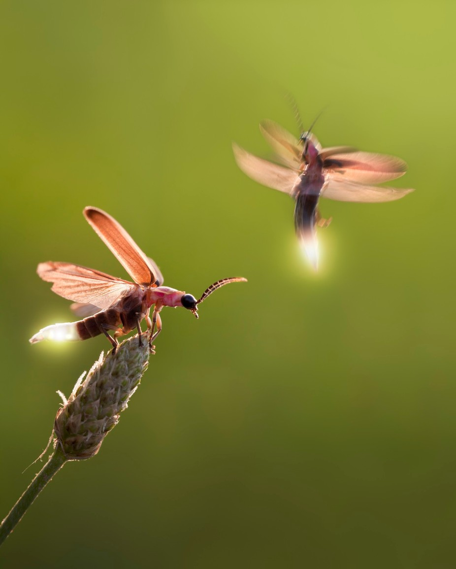 Love is in the air by macropixel - Small Things In Nature Photo Contest