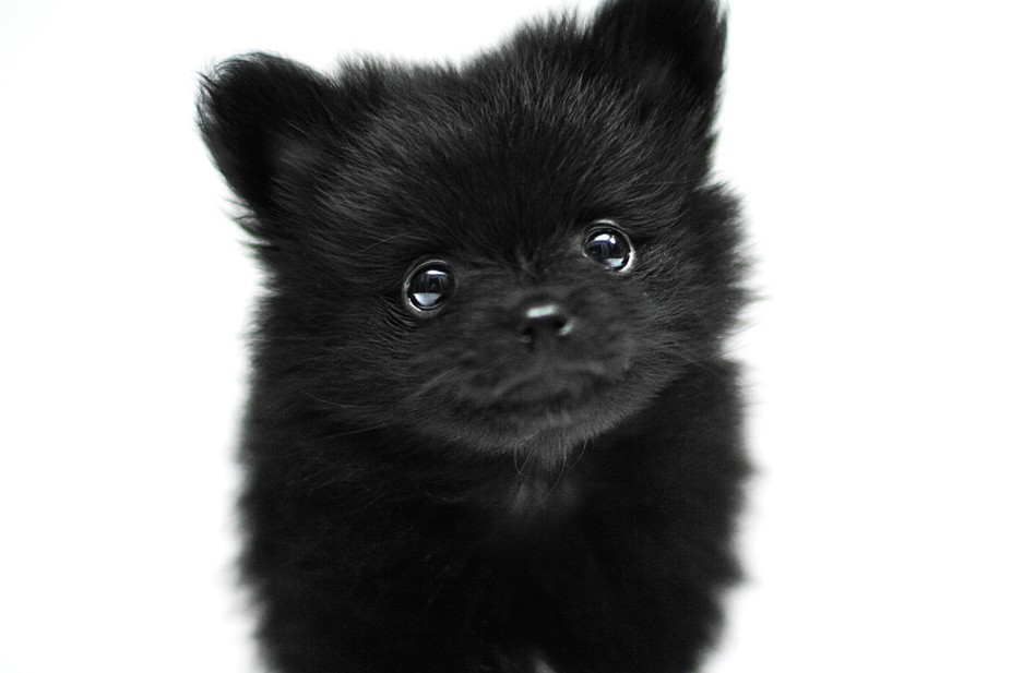 """Her name is Babs, but at 1.5lbs. """"Itty-Bitty"""" is what she answers to."""