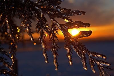 Tree FrozenII