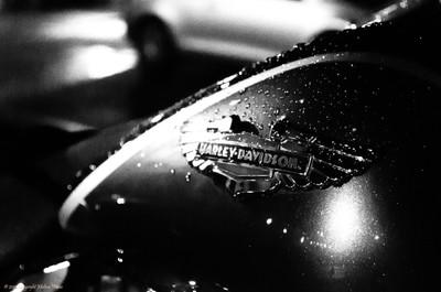 Harley in the Rain