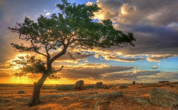 One Tree by daniellepowell - Nature In HDR Photo Contest